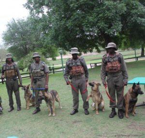 Anti Poaching Dogs