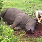 Rhino Poaching.