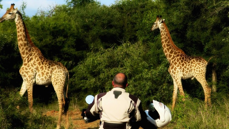 giraffe-motorcycle-safari-south-africa